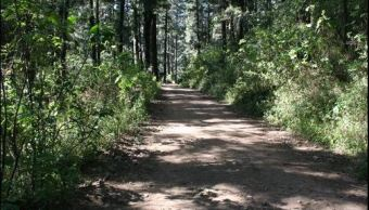 El deterioro de los bosques agudiza el problema de la escasez de agua. (Twitter@CONANP_mx)