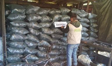 Aseguran 30.3 metros cúbicos de carbón vegetal en Hidalgo. (Noticieros Televisa)