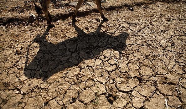 En la zona Costade Chiapas también se resienten los efectos del estiaje, en los municipios de Tonalá, Arriaga y Pijijiapan. (Getty Images, archivo)