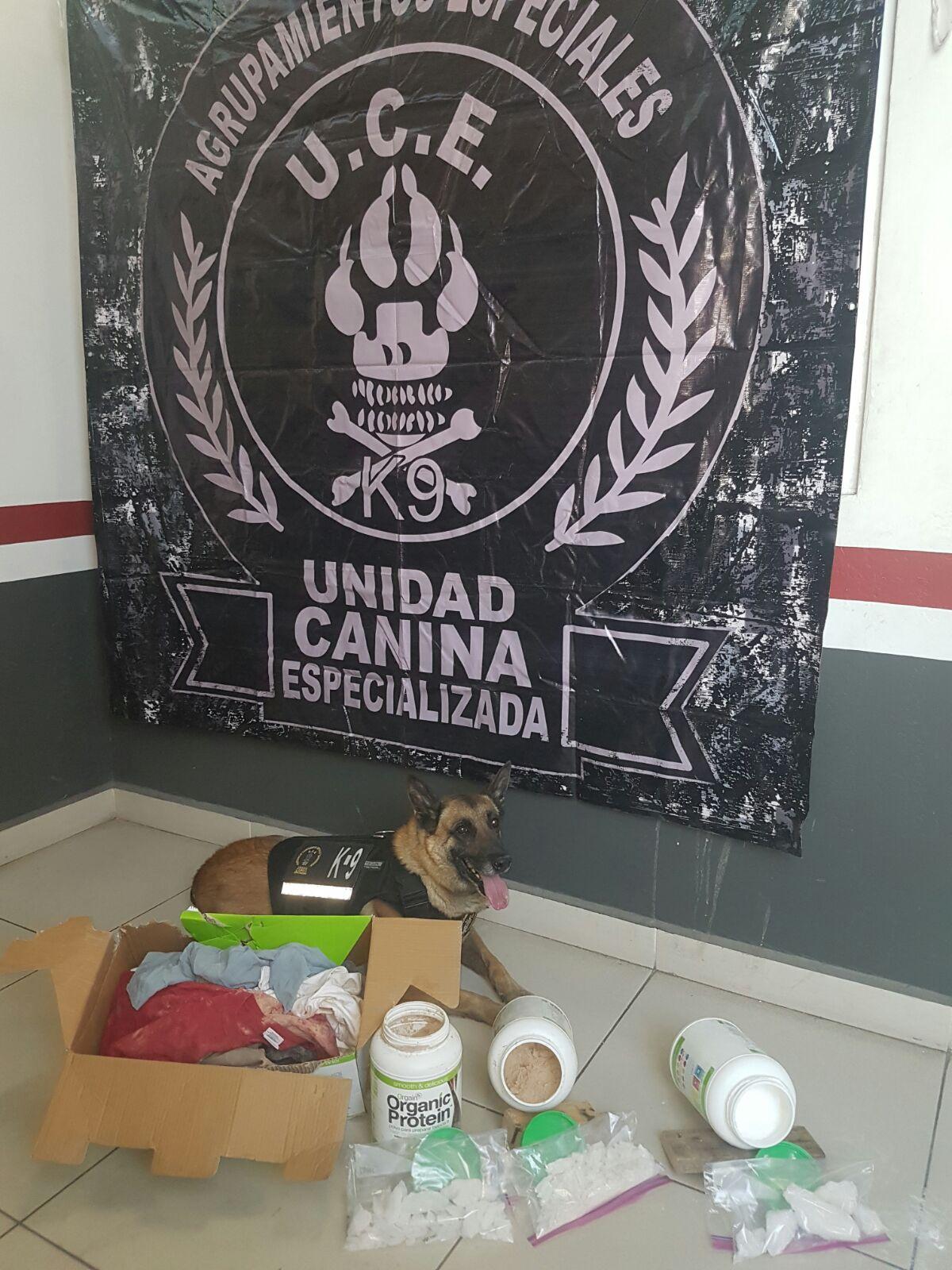 El elemento canino 'killer' descubre droga cristal que estaba escondida en una caja (Fiscalía de Jalisco)