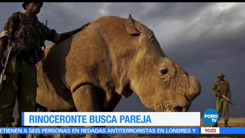 Extra, Extra Rinoceronte blanco del norte busca pareja en Tinder