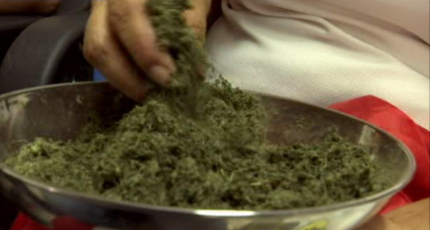 Planta que utilizan estudiantes para crear pegamento ecológico (Noticieros Televisa)
