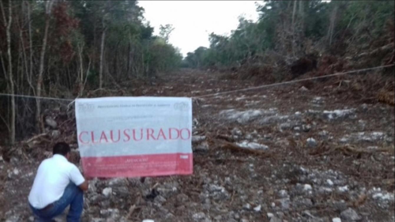 Predio donde se realizó el desmonte de vegetación, ubicado en Puerto Morelos, Quintana Roo (Twitter, @PROFEPA_Mx)