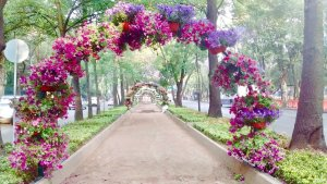 Primer Festival de Flores y Jardines. (Twitter: @GobCDMX)