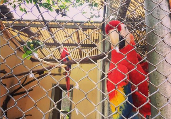En Chiapas se han rescatado más de 800 especies por decomisos. (Twitter @juanelo_28)