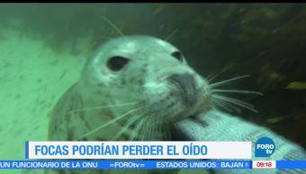 rutas de navegación, pérdida de audición, animales acuaticos, focas