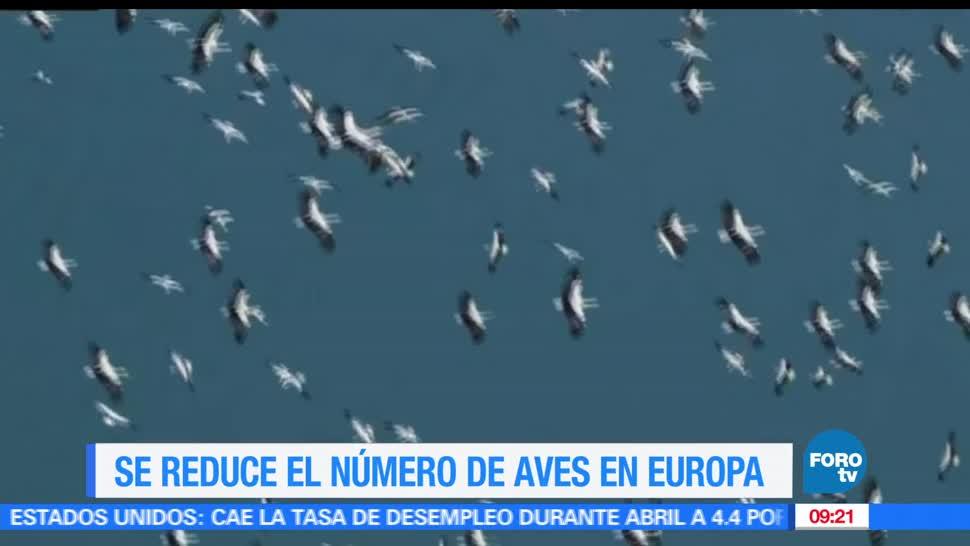 Extra Extra, reduce el número de aves, Europa, últimas décadas