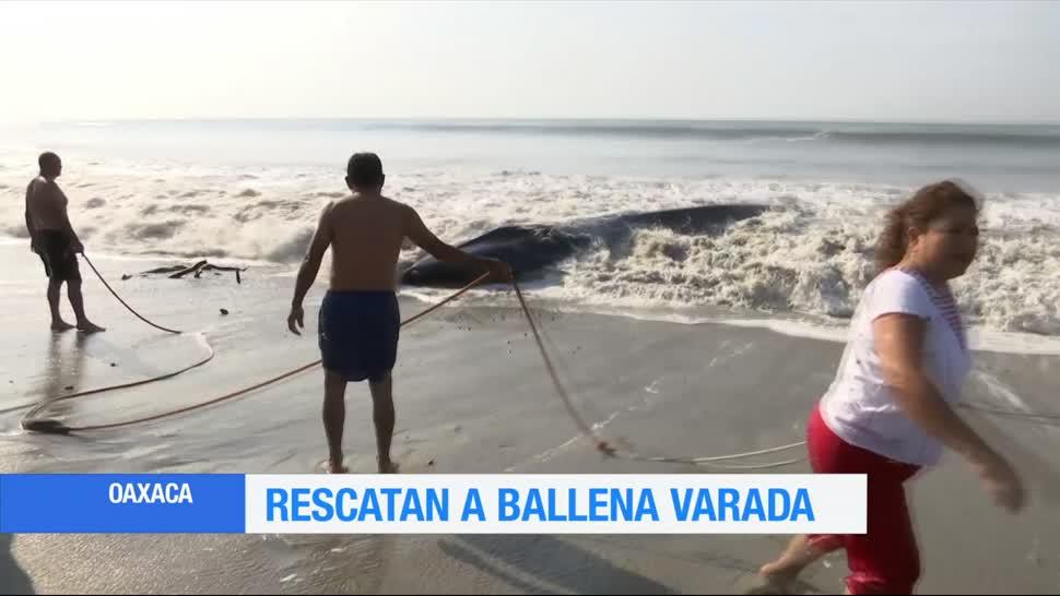 ballenas, oaxaca, rescatada, habitantes, pescadores
