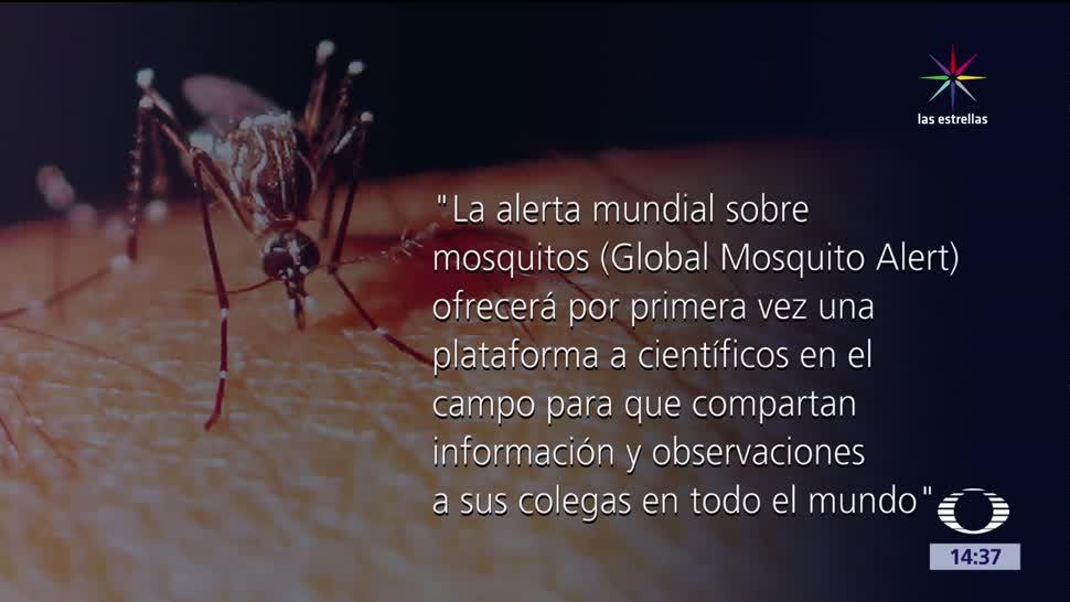 picadura, mosquito, salud, global