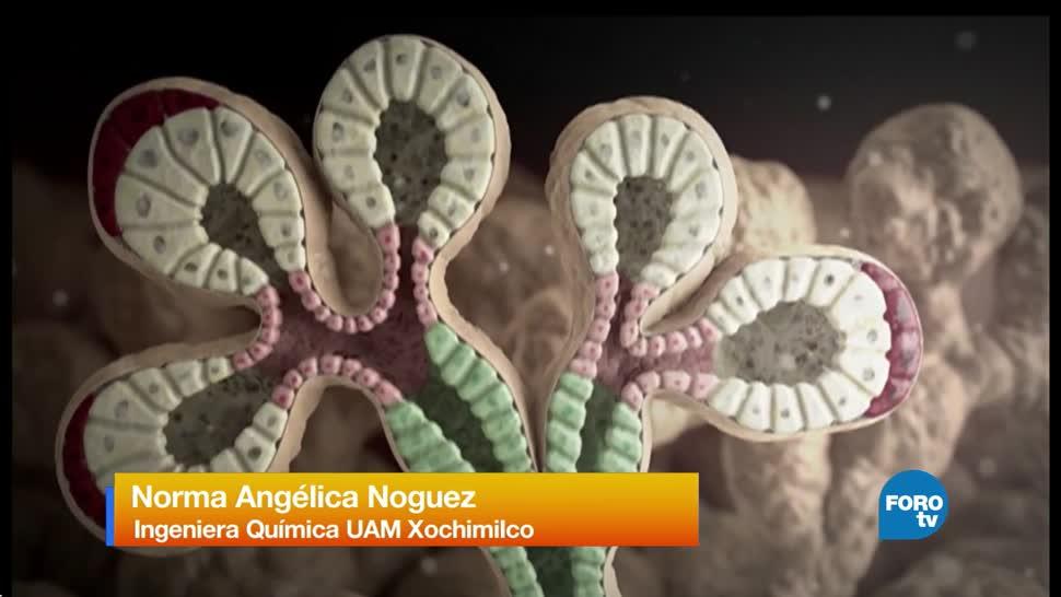 medicamento, desarrollado, UAM, Xochimilco,