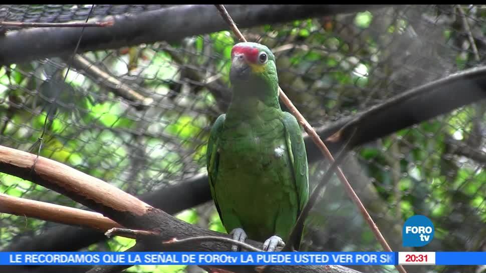 noticias, forotv, Chiapas, especies de aves, aves, 700 especies