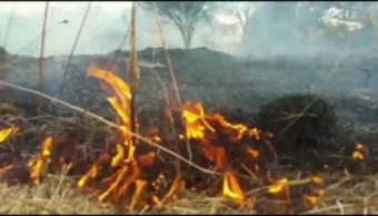 Ocampo, Incendio forestal, consume, hectáreas, bosque en Guanajuato, ecología