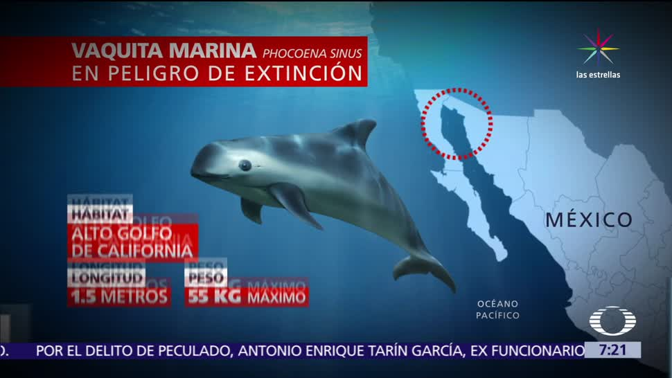 México, preservar la vaquita marina, especie amenazada, pesca legall