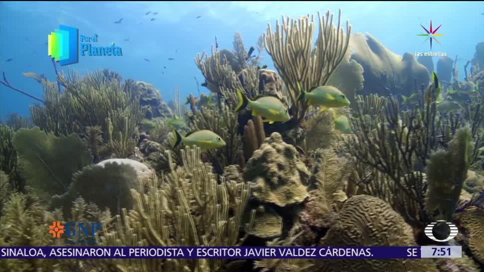 mayores santuarios, vida marina, Cuba, Los Jardines de la Reina