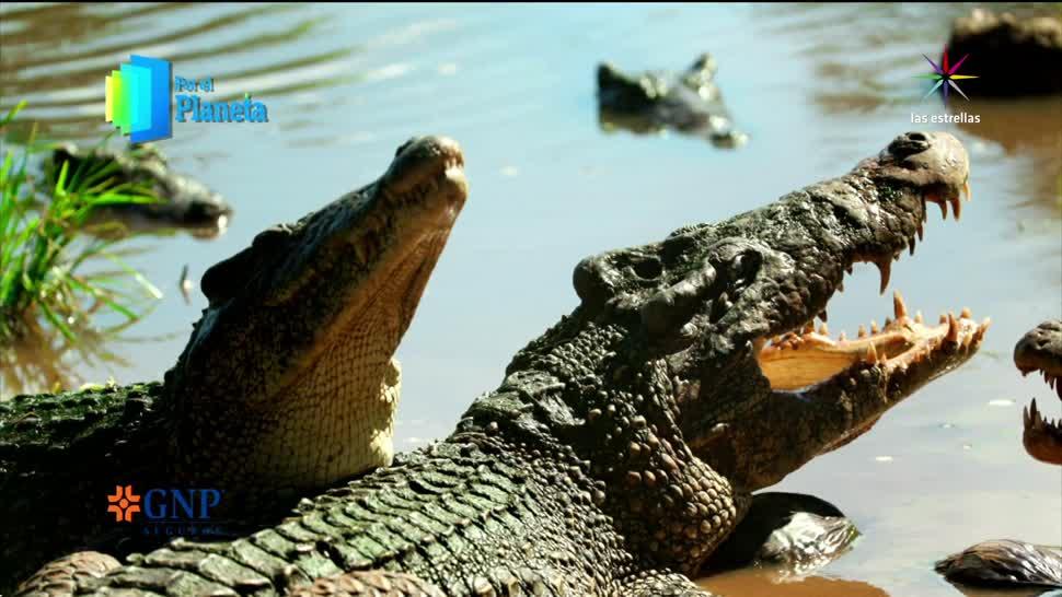 Por el Planeta, Cuba, reservas, marinas, cocodrilos, fauna marina
