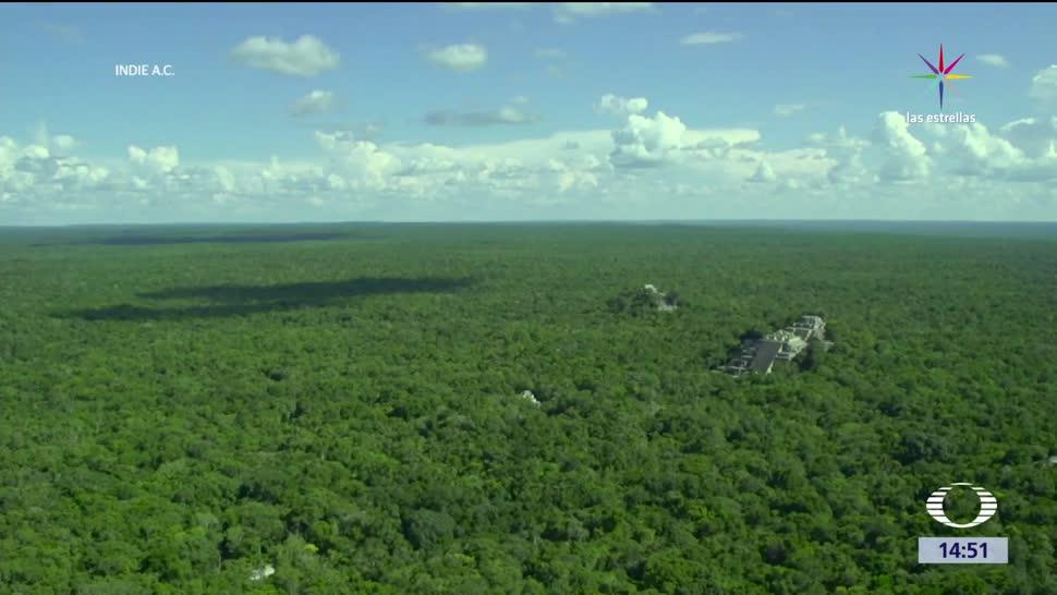 noticias, televisa, Calakmul, Patrimonio Cultural de la Humanidad, reserva de Calakmul, patrimonio