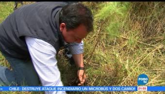 Óscar González, candidato del PT, realiza, actividades de reforestación, gubernatura, edomex