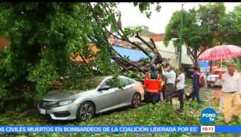 Árboles caídos, tráfico intenso, lluvia, CDMX, lluvia, afectacioens