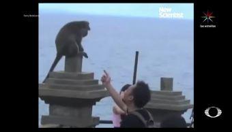 macacos, extorsionadores, isla, Bali, indonesia, video