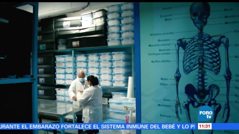 Acervo, restos humanos, grande, Museo de Antropología