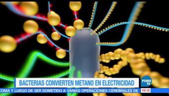 profesor, célula de combustible, bacterias, metano, energía eléctrica