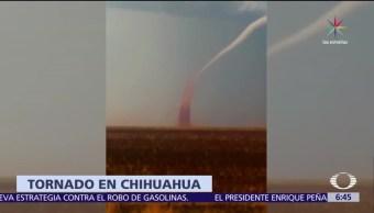 culebra de agua, centro de Chihuahua, heridos, Huejotzingo, Puebla