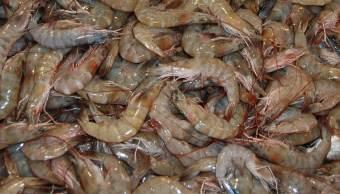 La veda del camarón es para asegurar la continuidad de los procesos de sustentabilidad pesquera. (Notimex, archivo)