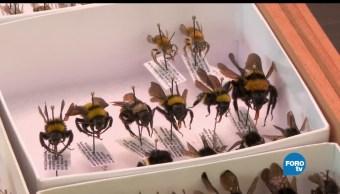 Tipos, abejas, miel, México, nuestro país, miel