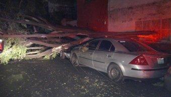 Afectaciones en la delegación Miguel Hidalgo, CDMX, por fuertes vientos