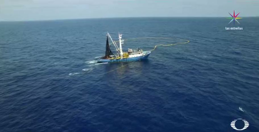 Alistan plan de rescate para 140 especies en Islas Revillagigedo