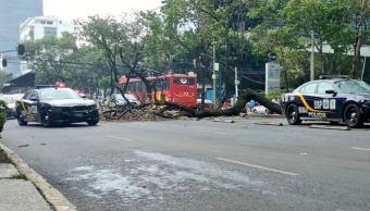 Varios árboles cayeron en la CDMX por los fuertes vientos. (FOROtv)