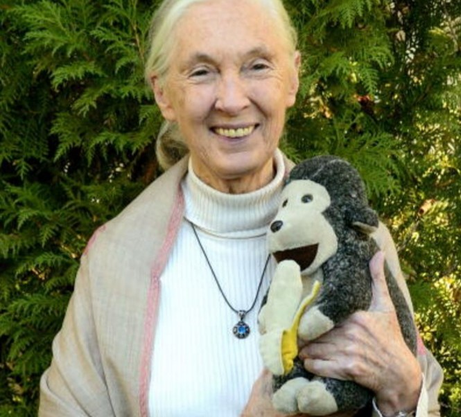 Jane Goodall, reconocida investigadora de chimpancés de origen inglés (Getty Images)
