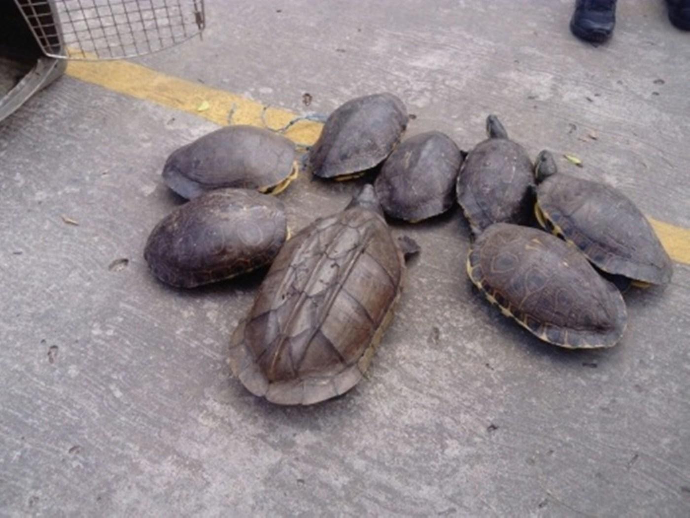 Decomisan tortugas en la frontera sur de México