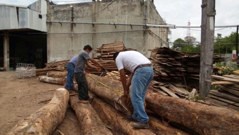 Delegados de Profepa decomisan madera talada ilegalmente