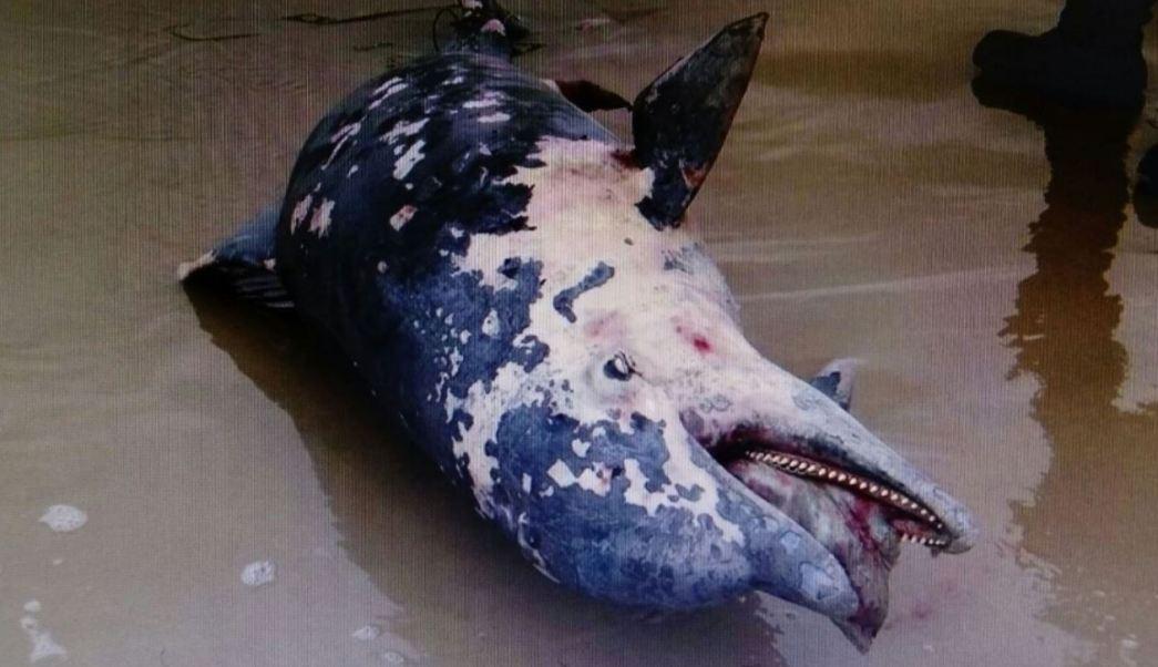 Delfin, Tamaulipas, Semar, Profepa, Noticias, Noticieros televisa