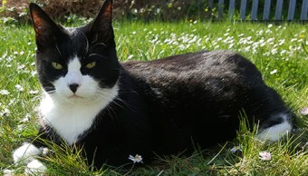 gato-rio-tamesis-muelle-londres-rescate