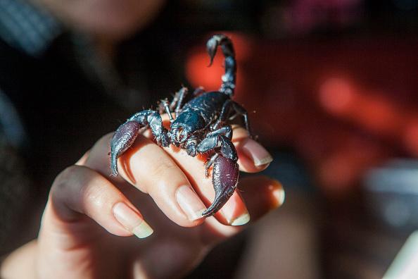 Especie de escorpion es sostenido por una persona