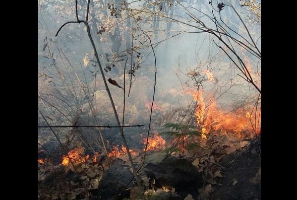Incendio forestal en Bugambilias, Jalisco. (Twitter @SemadetJal)