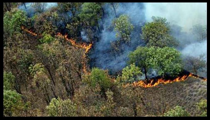 incendios jalisco, bosques, daños, medio, ambiente