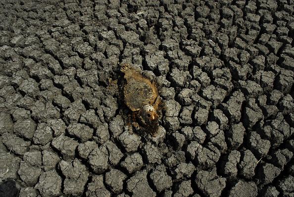 Pez muere por sequia de un lago en India