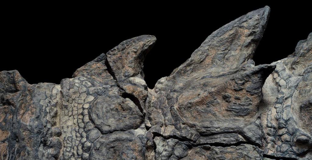 Hallan fósil intacto de dinosaurio en Canadá