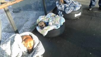 perros, brasil, perros callejeros, frío, refugio