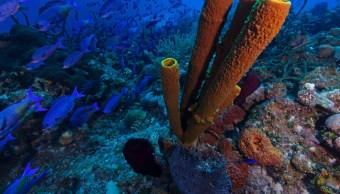 Por el Planeta - Arrecife Guanahacabibes en Cuba