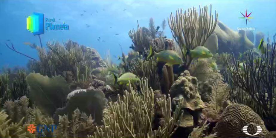 Por el Planeta - Jardines de la Reina en la costa salvaje de Cuba