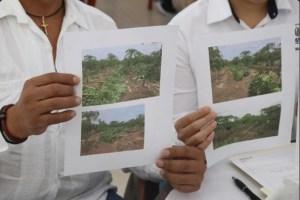 Productores de papaya muestran fotos de desastre