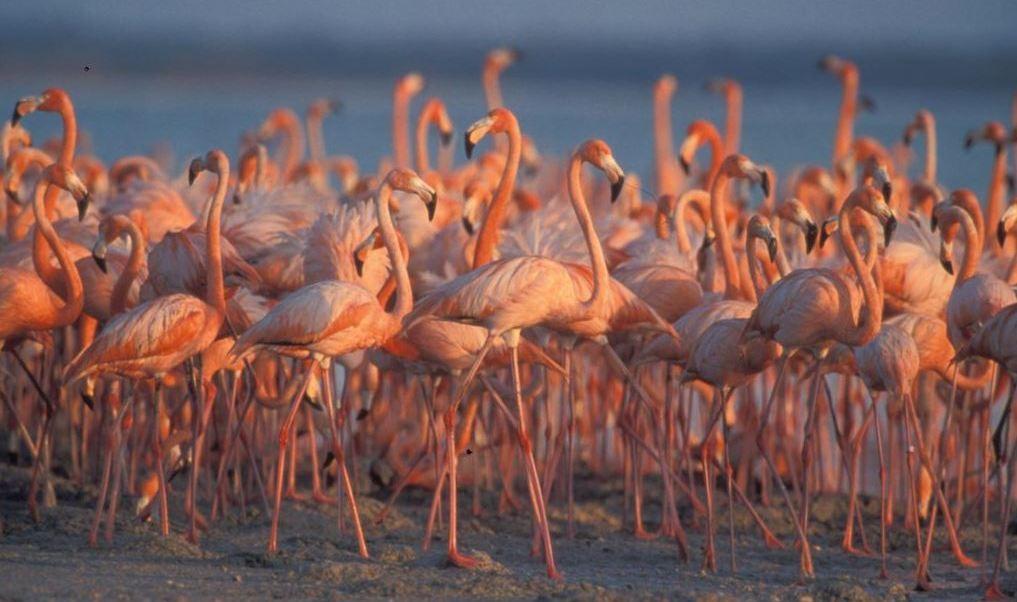 Reserva de la Biosfera Ría Celestún refugio del flamenco rosado