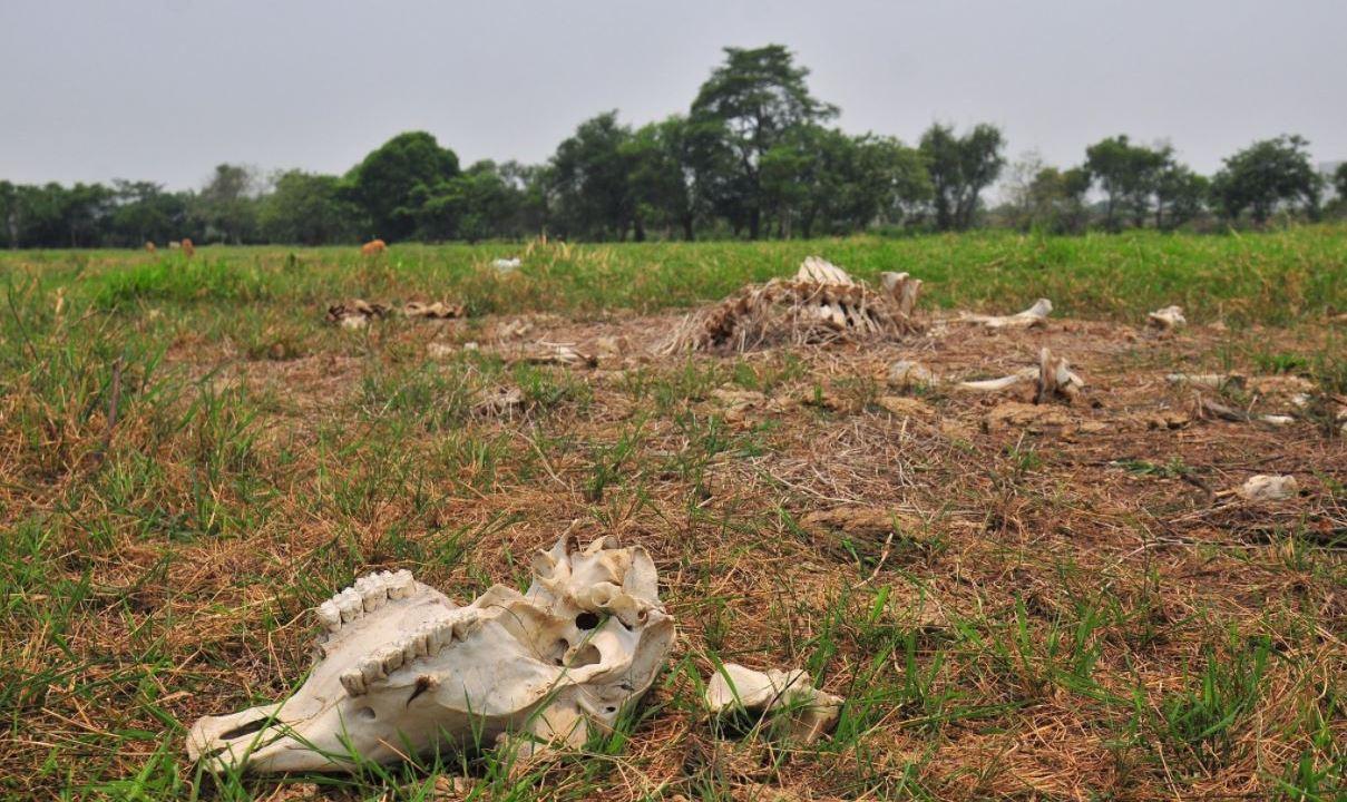 Sequía, escasez de Agua, Escasez de alimento, ganado, muerte de ganado , estiaje