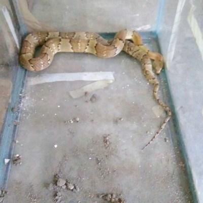 Mujer descubre serpiente en su ventana y recibe mordedura en un brazo