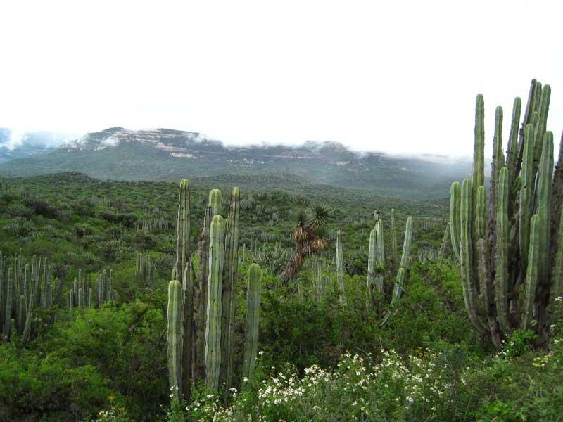 vegetacion del geoparque comarca minera en hidalgo