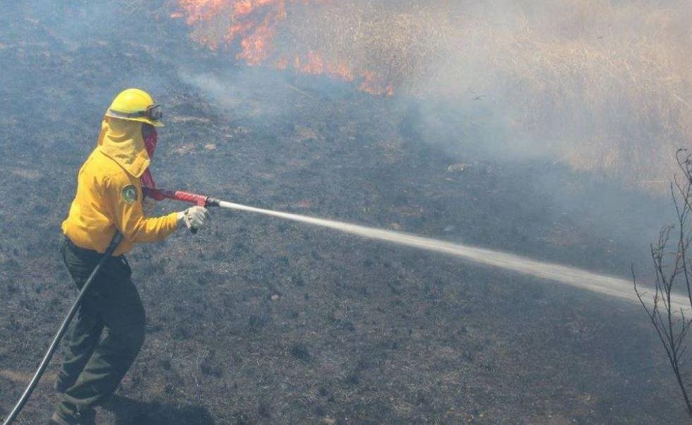 Incendios, Zacatecas, Comision forestal, Calor, Noticias, Noticieros